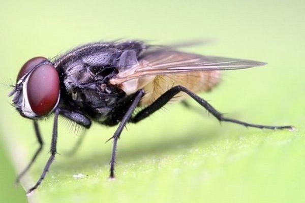 Mơ thấy con ruồi có điềm báo gì? đánh số nào?